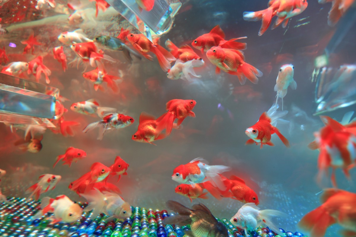 What Are The Best Freshwater Fish To Start With? (Lots Of ...